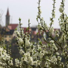 Frühling in Rothenburg